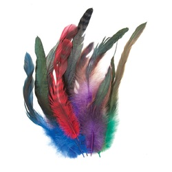 Feathers: Cocktail 10 to 30cm Assorted Colours Pack of 18