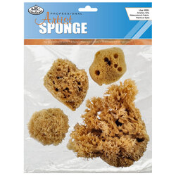 Organic Caribbean Sea Sponge Pack of 4